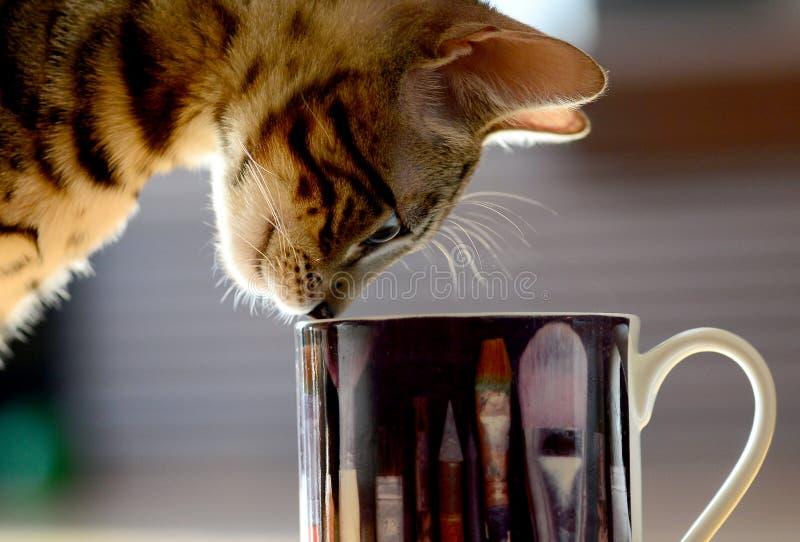 Härlig katt med koppen royaltyfria bilder