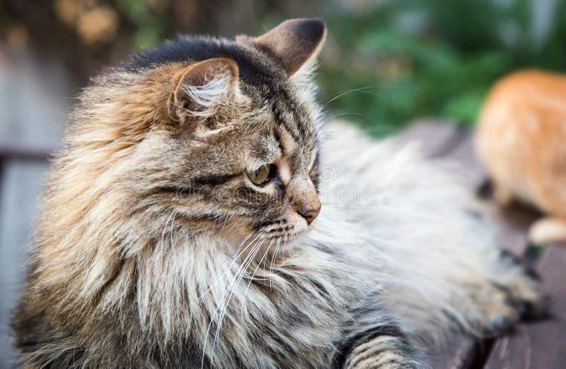 Härlig katt på gammalt brunt trä fotografering för bildbyråer