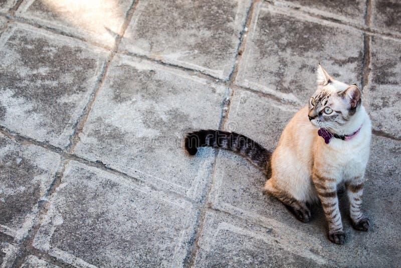 Härlig katt som sitter i en gård arkivbilder
