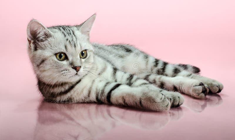 härlig kattunge little royaltyfria foton