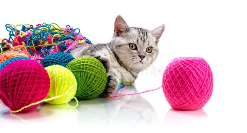 härlig kattunge little arkivbilder