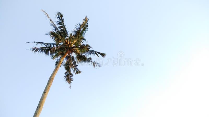 Härlig kokospalm med himmelbackgound bild för naturlandskapbackgound royaltyfri bild