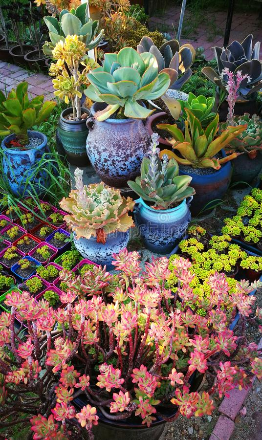 Härlig kombination för suckulenta växter royaltyfri fotografi