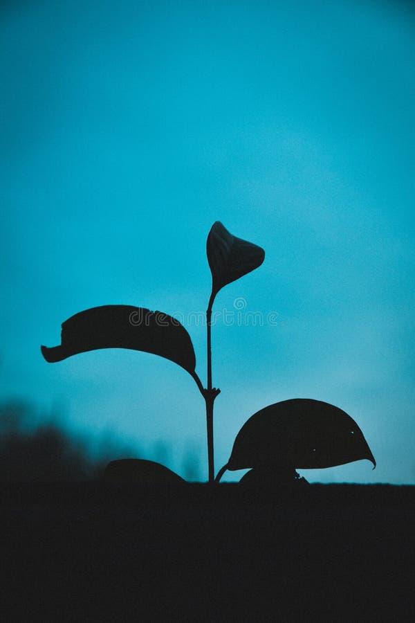 Härlig kontur av en växt med en blå härlig naturlig bakgrund royaltyfri bild