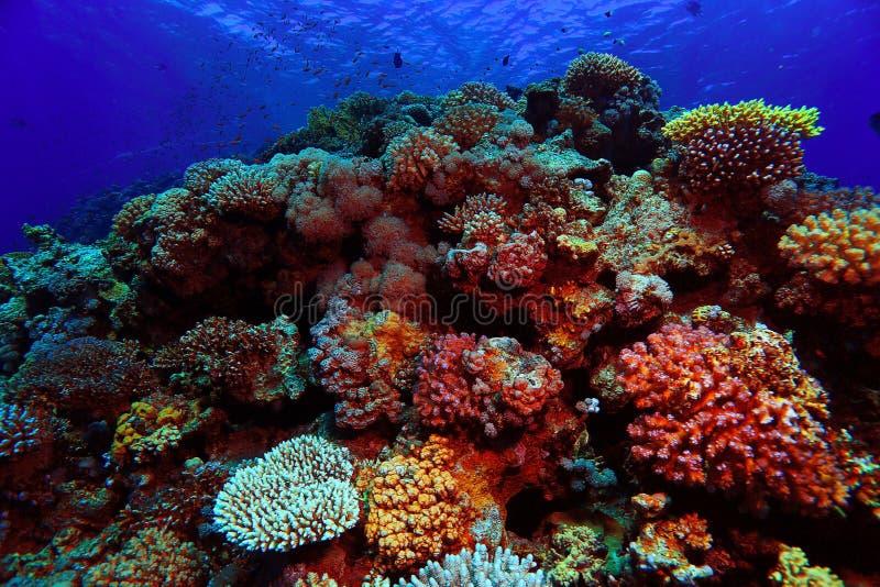 härlig korallrev fotografering för bildbyråer