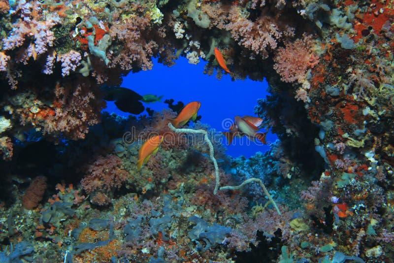 härlig korallrev arkivfoto