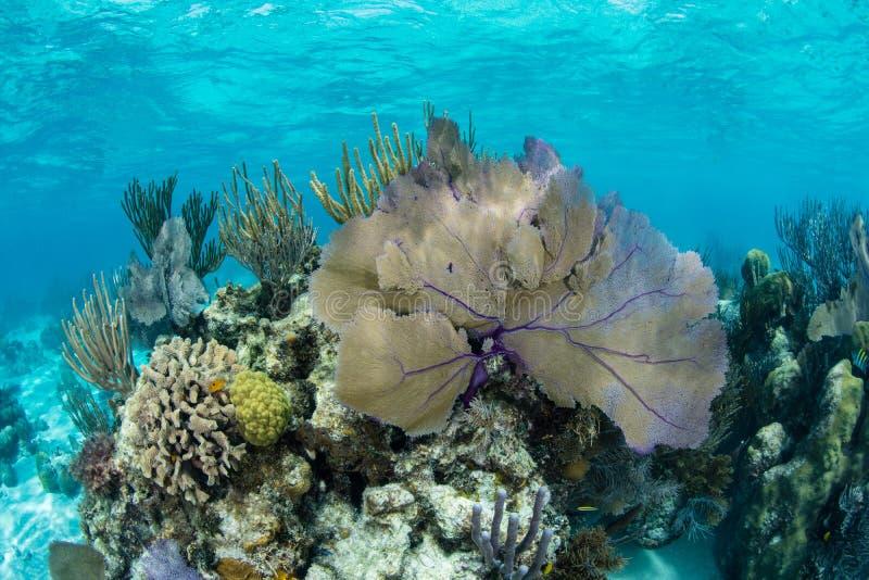 Härlig korallrev i det karibiska havet royaltyfri fotografi