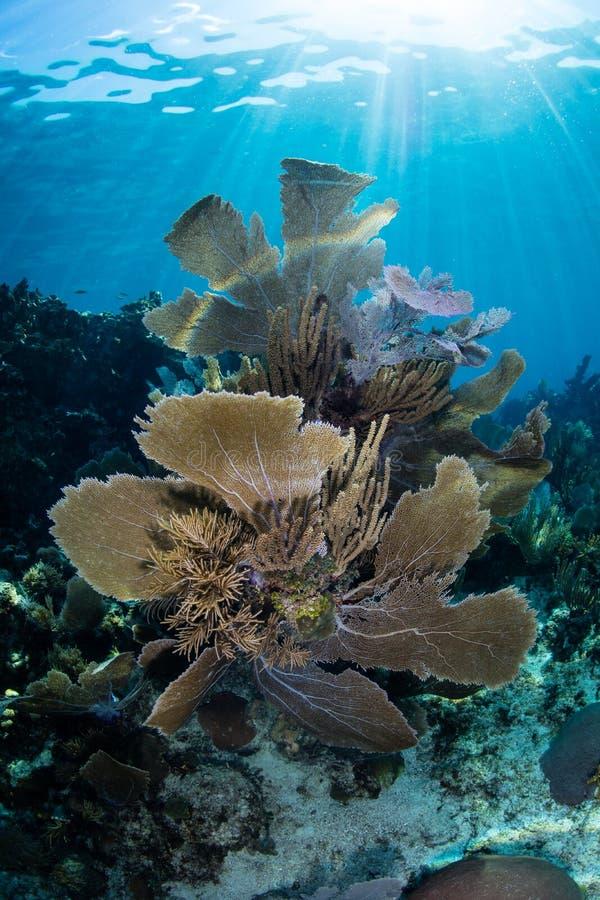 Härlig korallrev i det karibiska havet royaltyfri foto