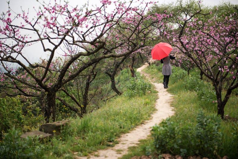 Härlig kvinna i persikafruktträdgård fotografering för bildbyråer