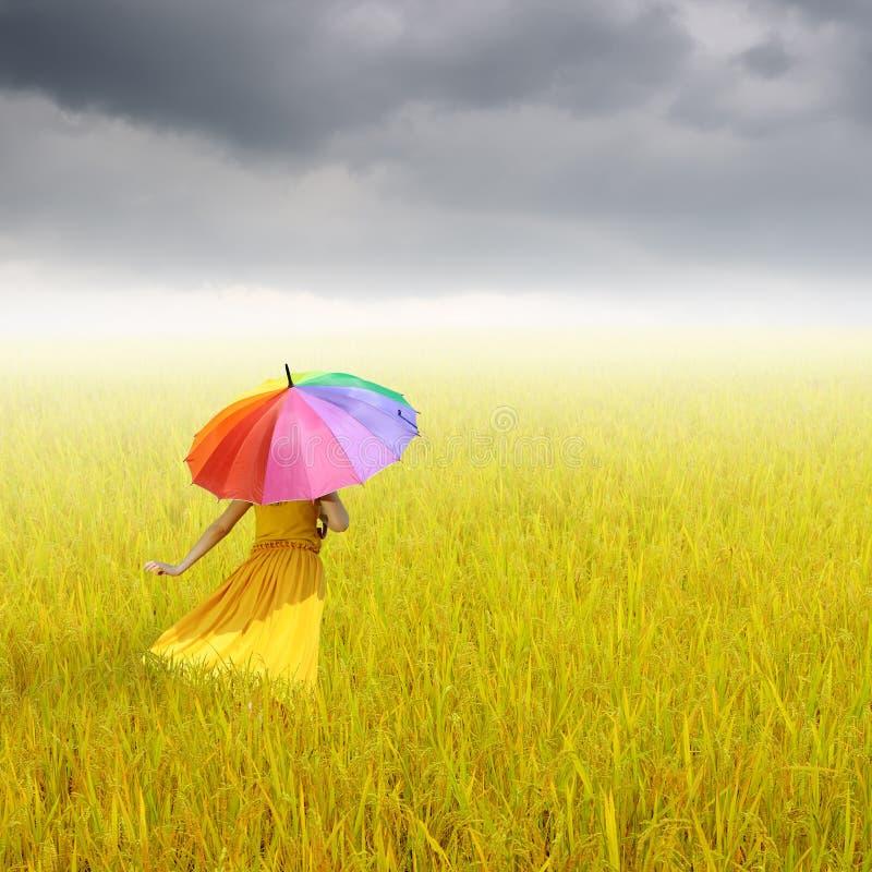 Härlig kvinna som rymmer det mångfärgade paraplyet i gul risfält och rainclouds arkivfoton
