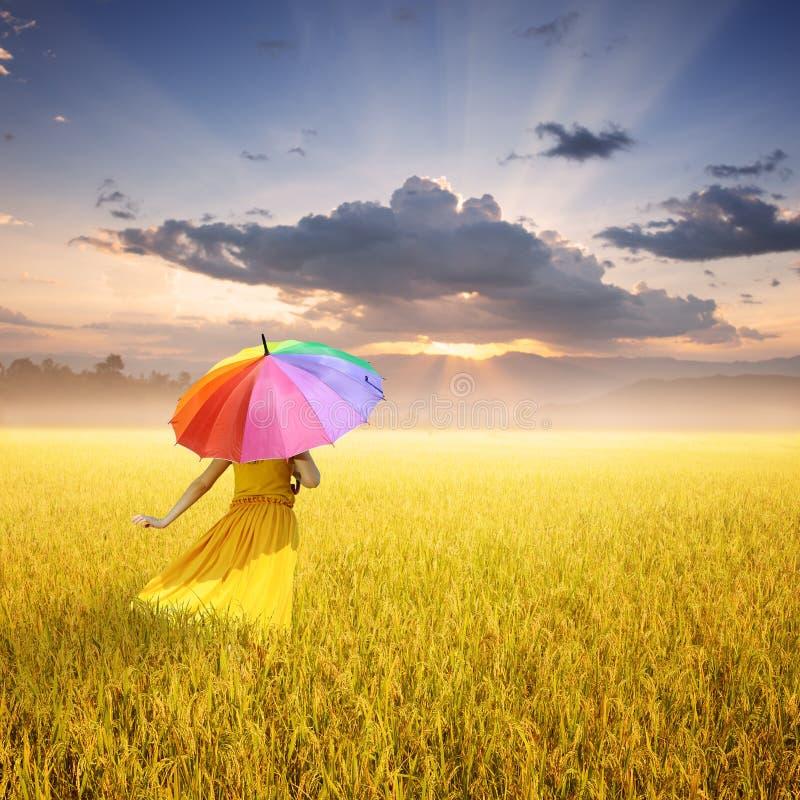 Härlig kvinna som rymmer det mångfärgade paraplyet i gul risfält och solnedgång royaltyfri bild