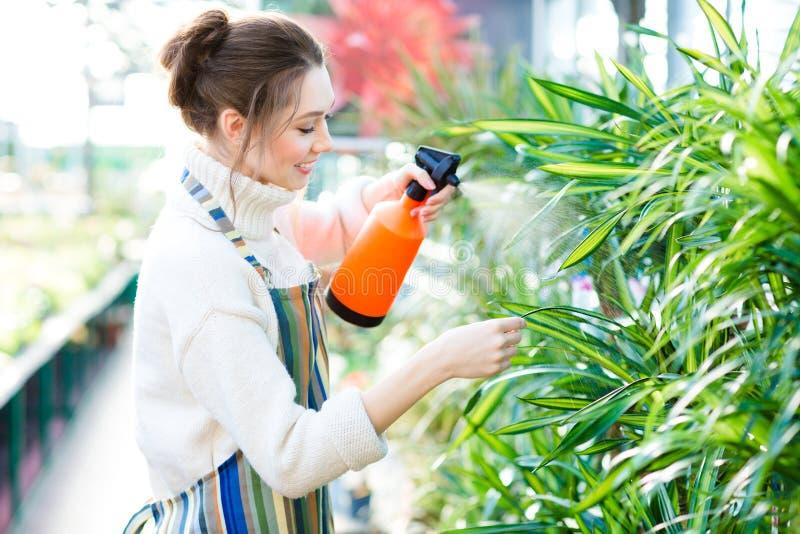 Härlig kvinnaträdgårdsmästare i färgrikt förkläde som besprutar blommor och växter fotografering för bildbyråer