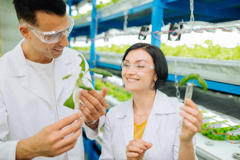 Härlig kvinnlig agronom som ler plantera gräsplaner med kollegan arkivbild