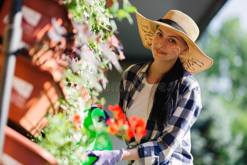 Härlig kvinnlig trädgårdsmästare som bevattnar växter i trädgården i varm sommardag arbeta i trädgården för begrepp arkivbild
