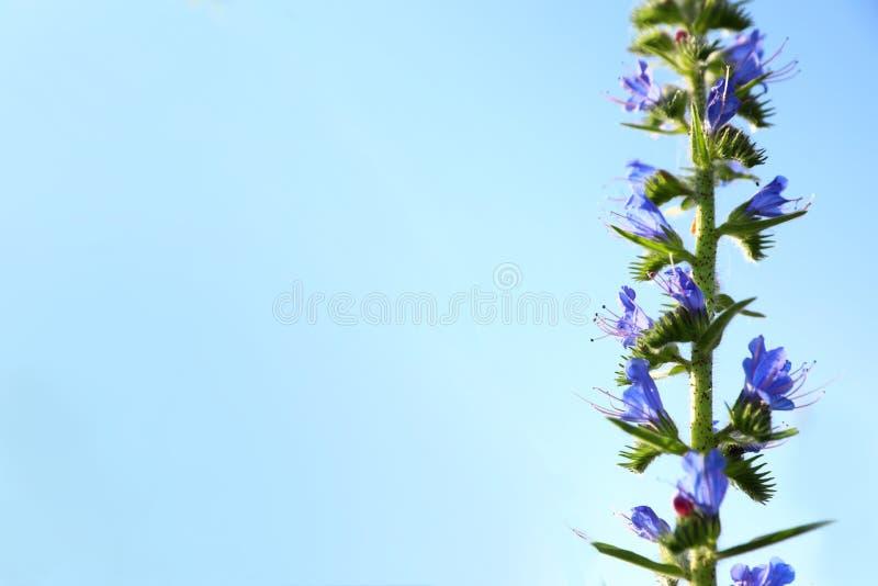 Härlig lös blomma med blå himmel på bakgrund Förbluffa naturen i sommar arkivfoto