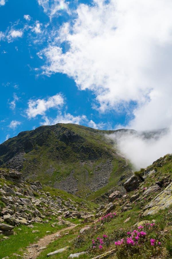 Härlig lös mountainscape med blommor och vaggar arkivbild