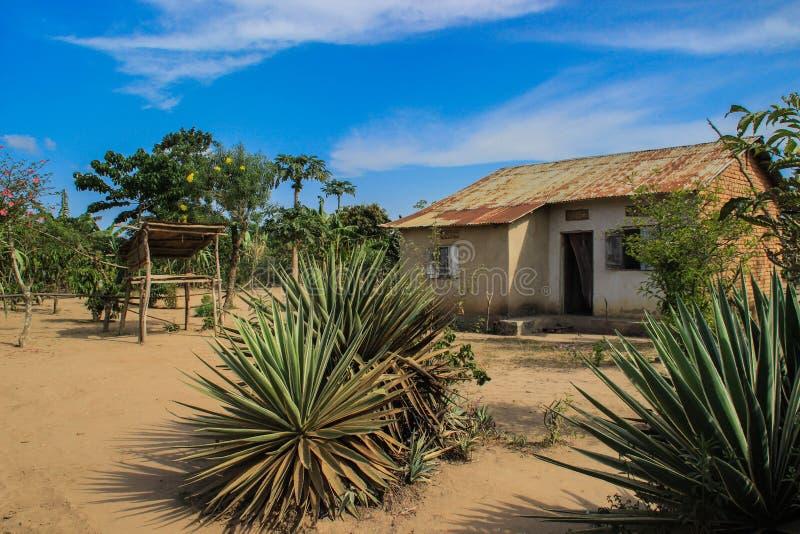 Härlig landskap borggård med ett byhus och tropiska växter i det ugandiskt royaltyfria bilder