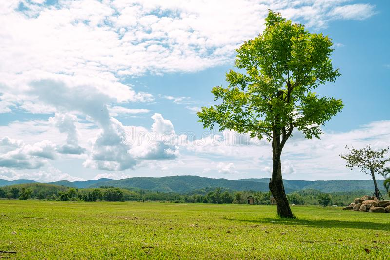 Härlig landskapsikt av trädet i ängen och berget som bakgrund arkivbild
