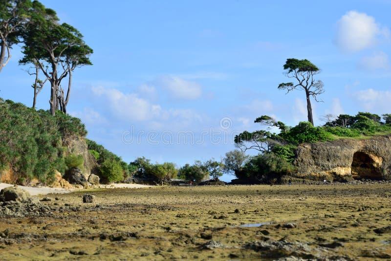 Härlig landskapstrandbild av naturliga Coral Beach som fylls med döda och levande koraller på Neil Island i Andaman och Nicobar I royaltyfri foto