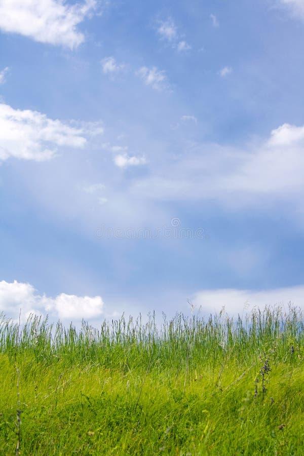 härlig lawn fotografering för bildbyråer