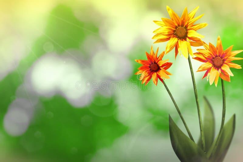 Härlig levande exotisk gazania med tomt på vänstert på naturen lämnar och förgrena sig bokehbakgrund Blom- vår- eller sommarblomm royaltyfri fotografi