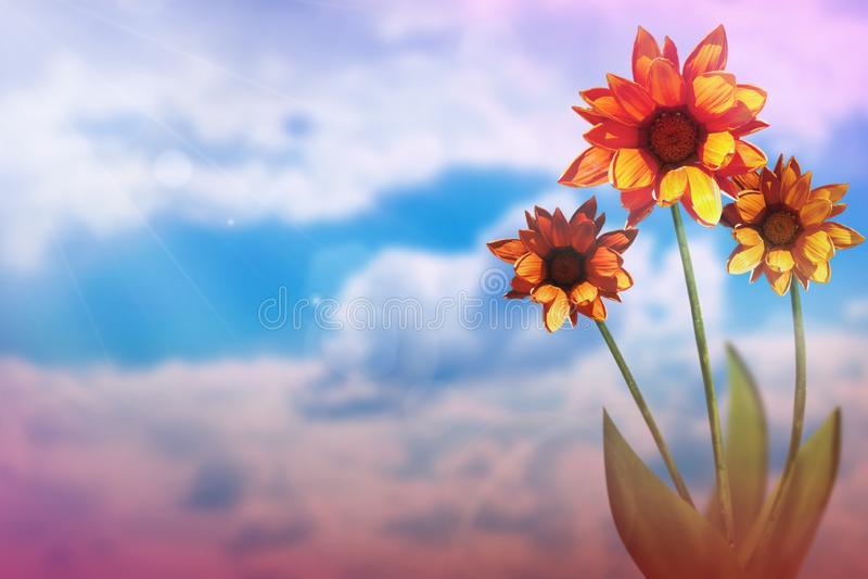 Härlig levande gazania med tomt på vänstert på himmel för solig dag med molnbakgrund Blom- vår eller sommarblommabegrepp arkivbilder