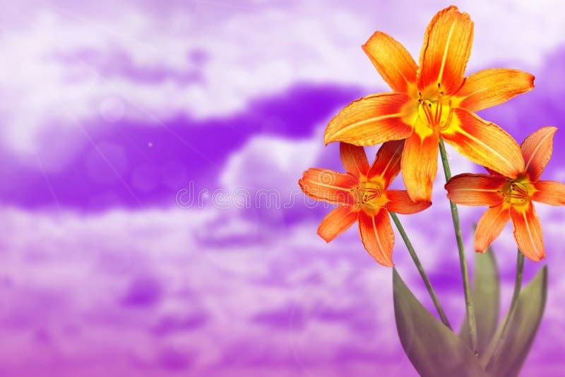 Härlig levande lilja med tomt på vänstersida på himmel för solig dag med molnbakgrund Blom- vår eller sommarblommabegrepp arkivfoto