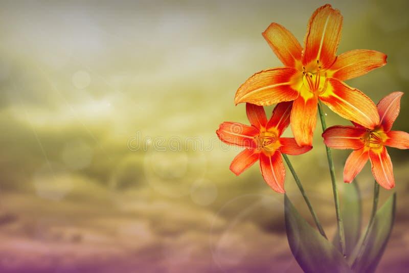 Härlig levande lilja med tomt på vänstersida på kulör himmel med molnbakgrund Blom- vår eller sommarblommabegrepp arkivfoto