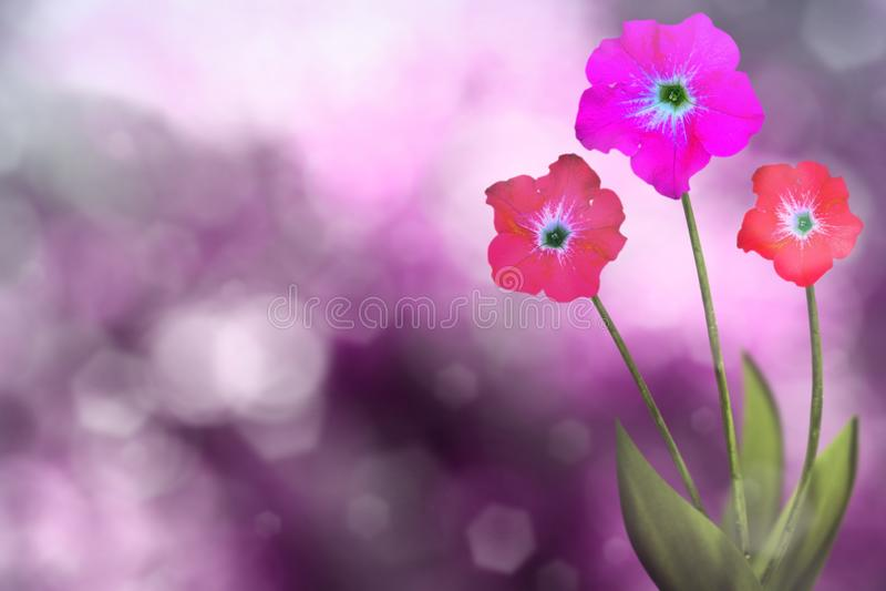 Härlig levande petunia med tomt på vänstersida på naturliga sidor och suddig bokehbakgrund för himmel Blom- conc vår- eller somma arkivfoton