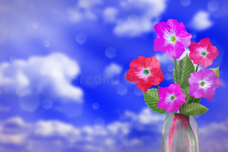 Härlig levande petuniabukettbukett i exponeringsglasvas med det tomma stället för din text på vänstersida på bokehbakgrund för mo royaltyfri bild