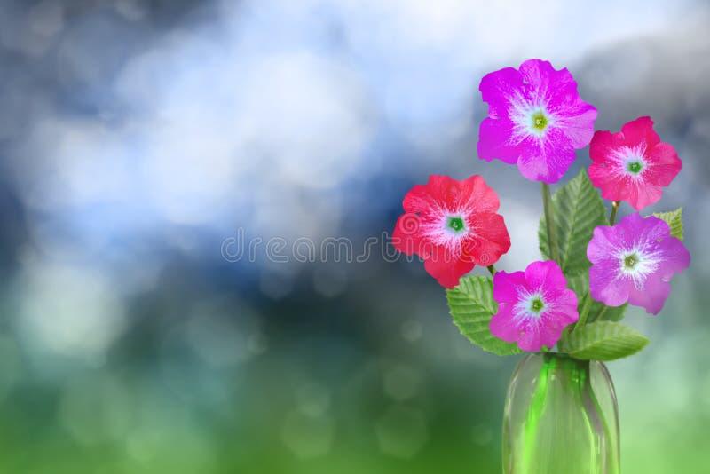 Härlig levande petuniabukettbukett i exponeringsglasvas med det tomma stället för din text på vänstersida på naturliga suddiga si arkivbild