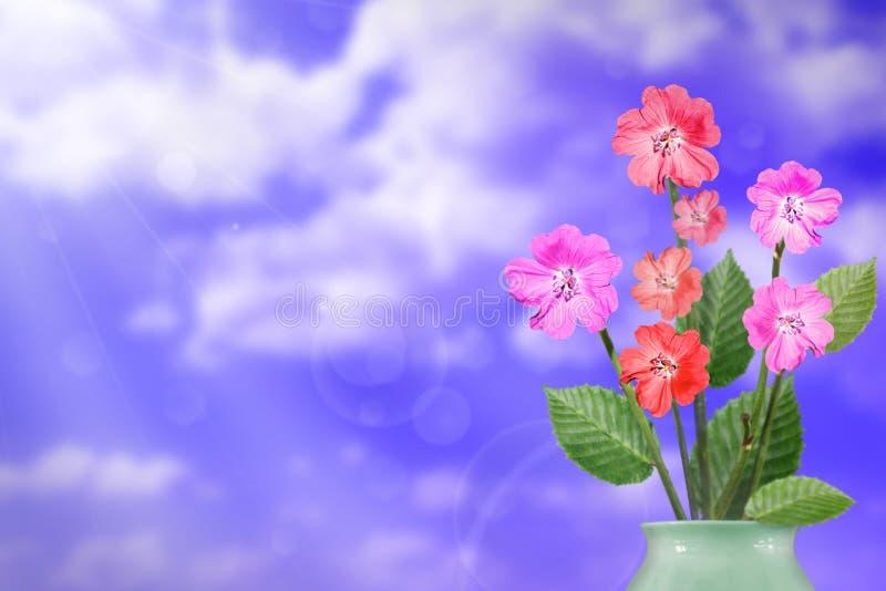 Härlig levande petuniabukettbukett i porslinvas med det tomma stället för din text på vänstersida på bakgrund för molnig himmel arkivfoto