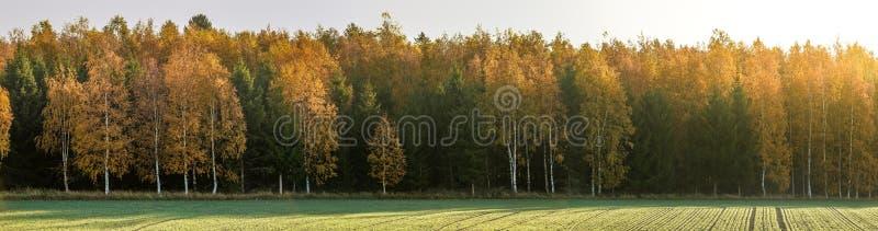härlig liggande för höst Färgrik skogpanorama arkivbilder
