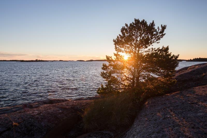härlig liggandesolnedgång Sörja trädet som växer på vagga royaltyfria bilder