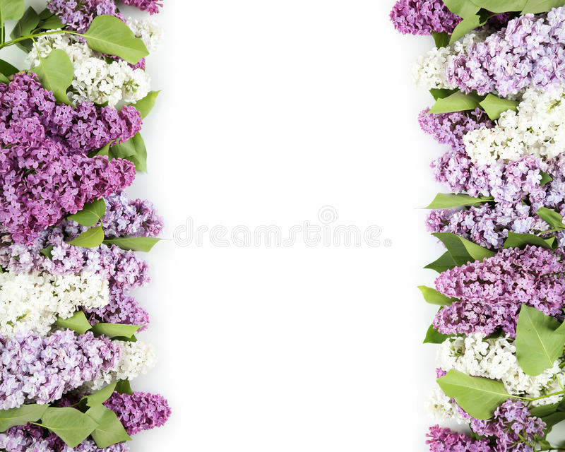 härlig lila arkivfoto
