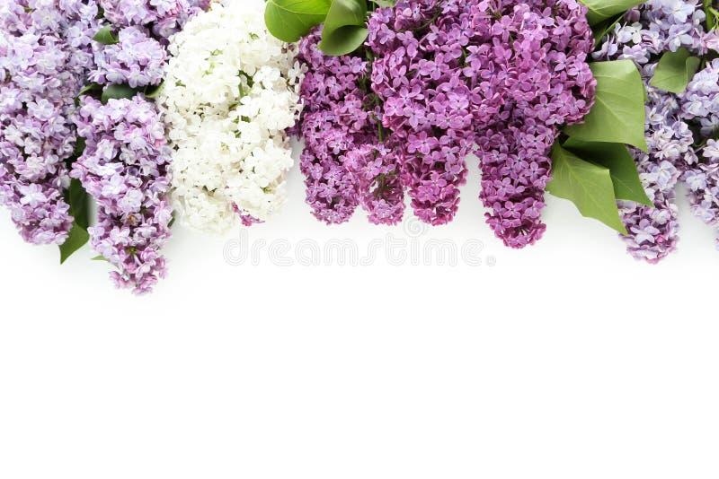 härlig lila arkivbild