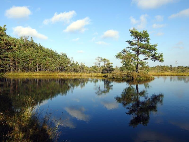 Härlig liten sjö med den lilla ön i det Aukstumalos träsket, Litauen arkivfoton