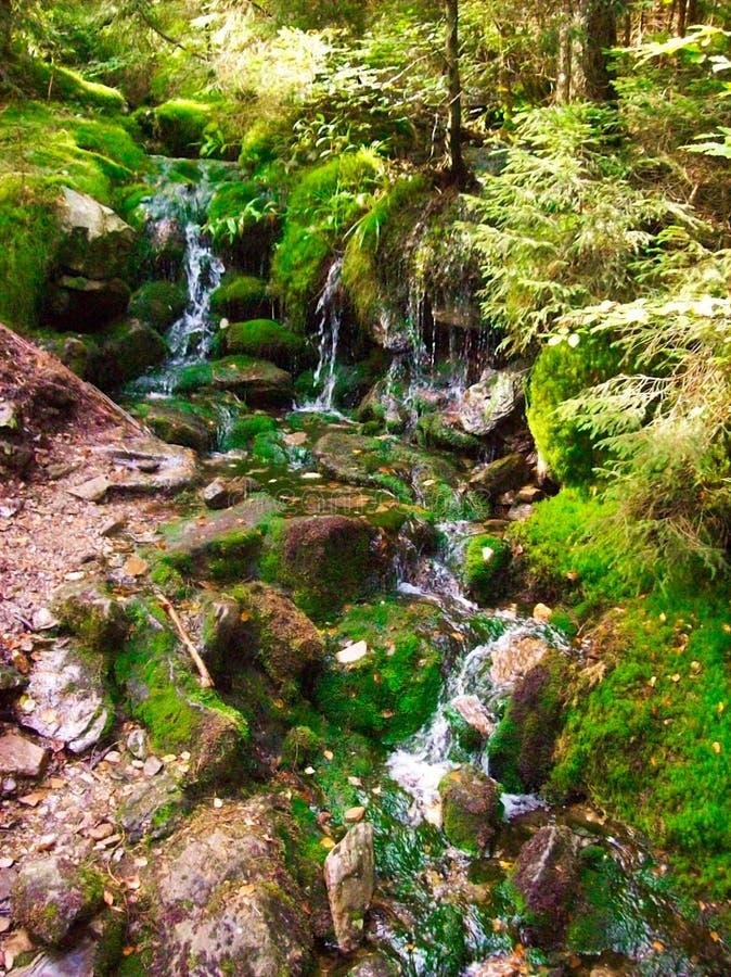Härlig liten vattenfall i skogen fotografering för bildbyråer