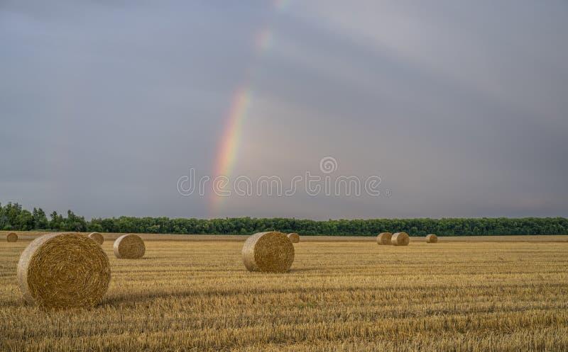 Härlig mångfärgad regnbåge över ett slutta vetefält med stora rullar av sugrör fotografering för bildbyråer