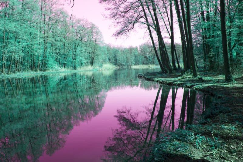 Härlig magisk skog med vatten arkivfoton