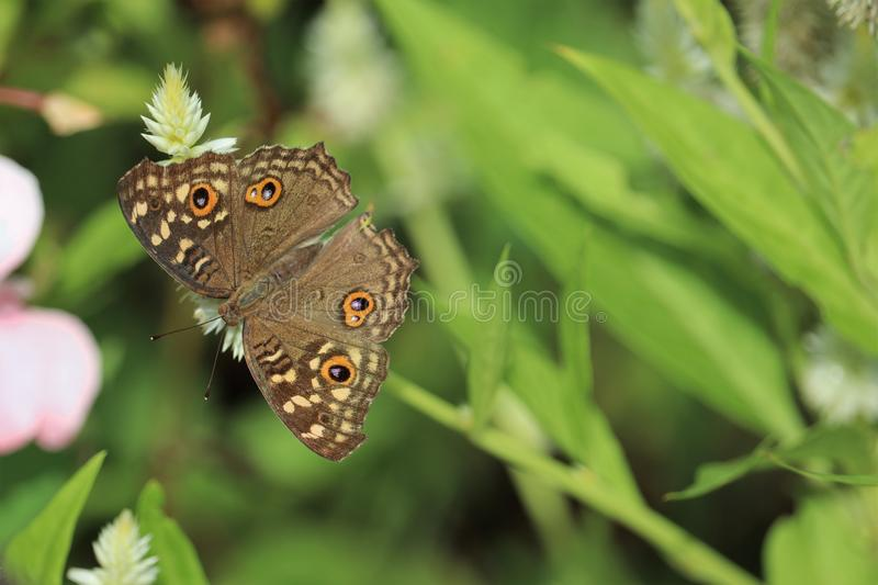 Härlig mal på fotoet för materiel för blommaroyalty det fria fotografering för bildbyråer