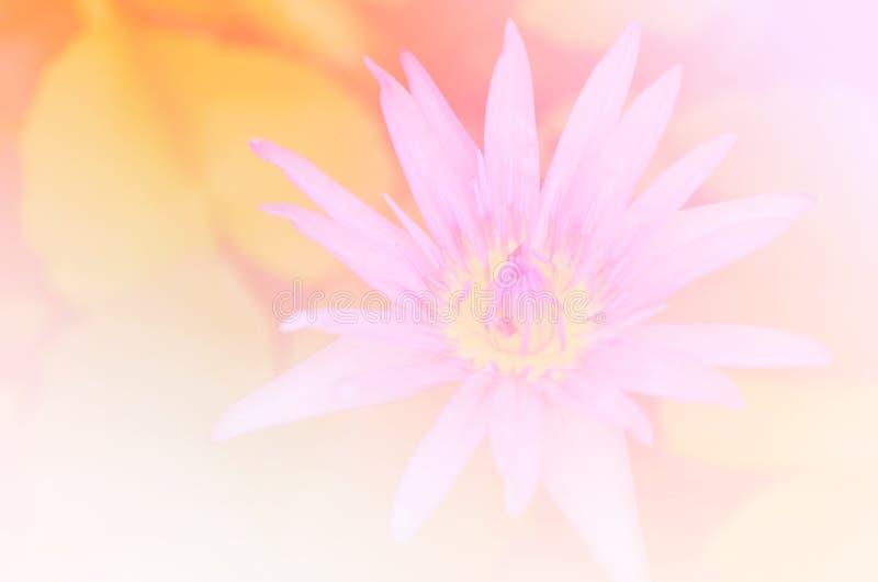 Härlig mjuk natur för bakgrunder för färgrosa färg- och blåttblommor - Lotus arkivbilder