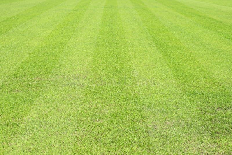 Härlig modell av nytt grönt gräs för fotbollsport royaltyfri fotografi