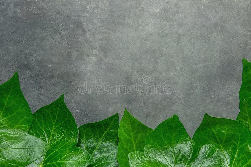 Härlig modell från nya gröna Ivy Leaves Forming Frame Border på mörk stenbakgrund Meddelande för baneraffischkort arkivfoton