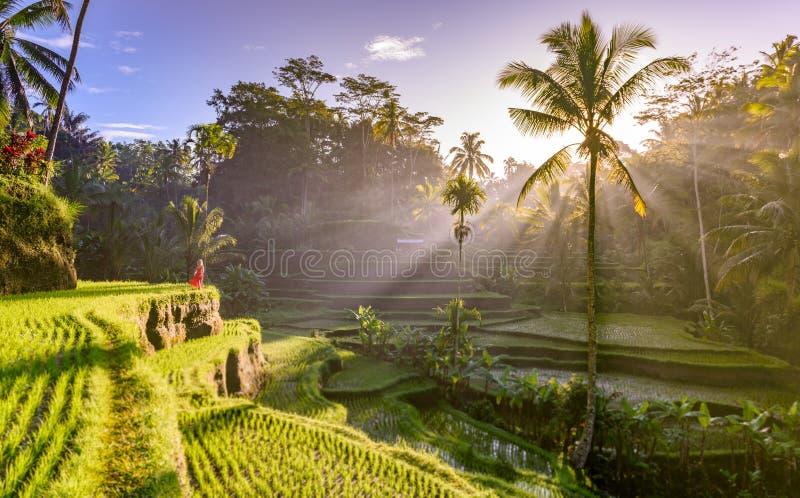 Härlig modell i röd klänning på Tegalalang risterrass 6 royaltyfri foto