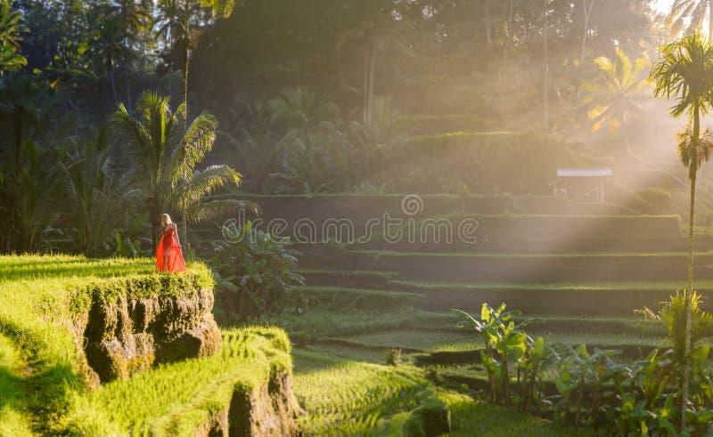 Härlig modell i röd klänning på Tegalalang risterrass 9 arkivbild
