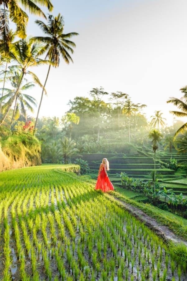 Härlig modell i röd klänning på Tegalalang risterrass 10 royaltyfria bilder