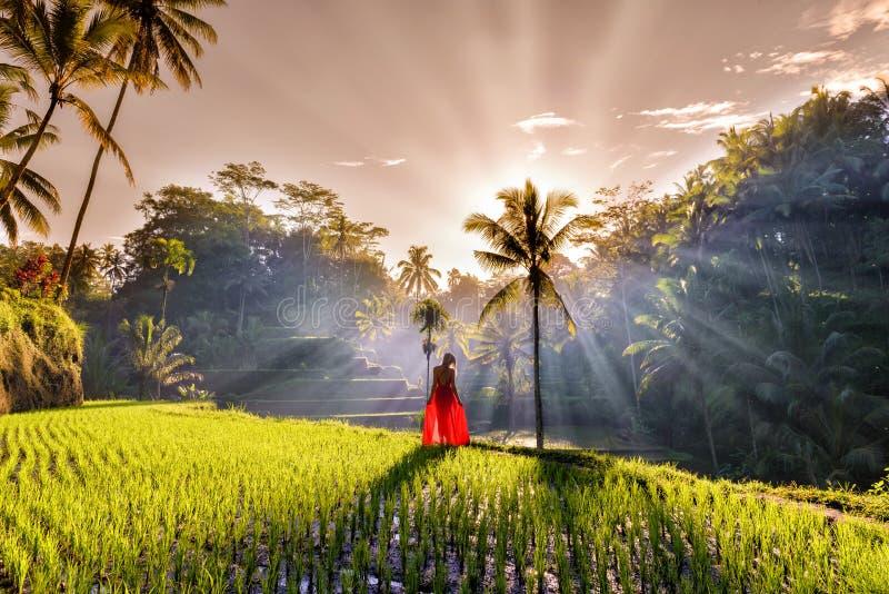 Härlig modell i röd klänning på Tegalalang risterrass 11 royaltyfri fotografi