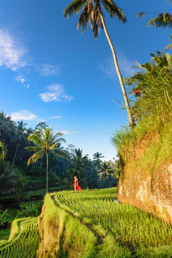 Härlig modell i röd klänning på Tegalalang risterrass 19 royaltyfri fotografi