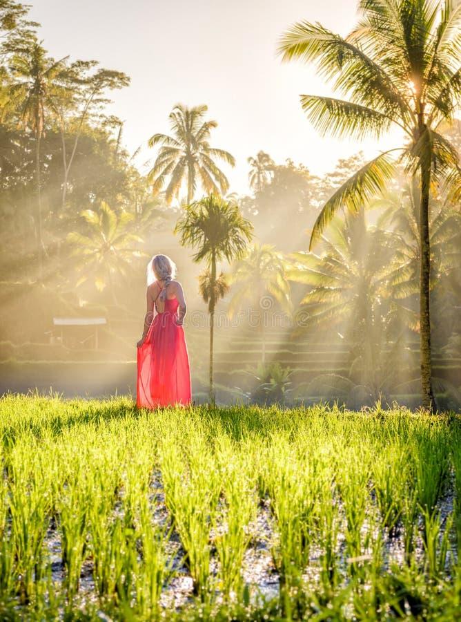 Härlig modell i röd klänning på Tegalalang risterrass 13 royaltyfri fotografi